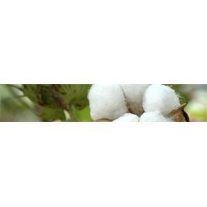 http://wwwi.GlobalPiyasa.com/lib/Urun/125/a707b8367f45b1180009f94d340d6aac_1.jpg
