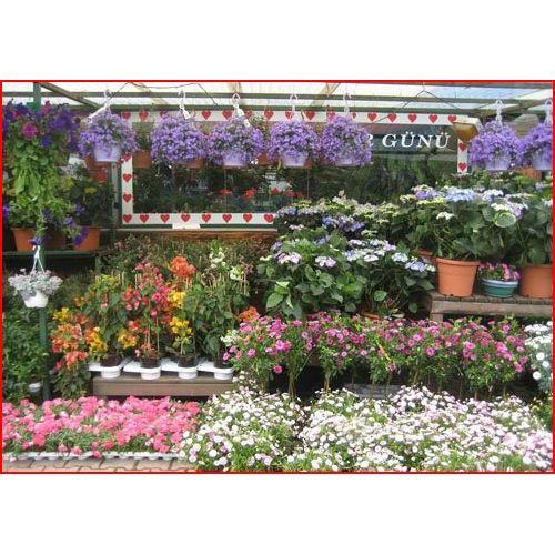 1336 euro bahçe euro flora a s