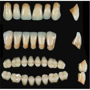 Acrylic Tooth