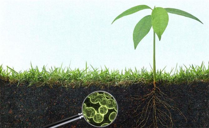 216351-Microbial Fertilizer Development and Production-Biyotab Biyoteknoloji San. ve Tic. Ltd. Şti.