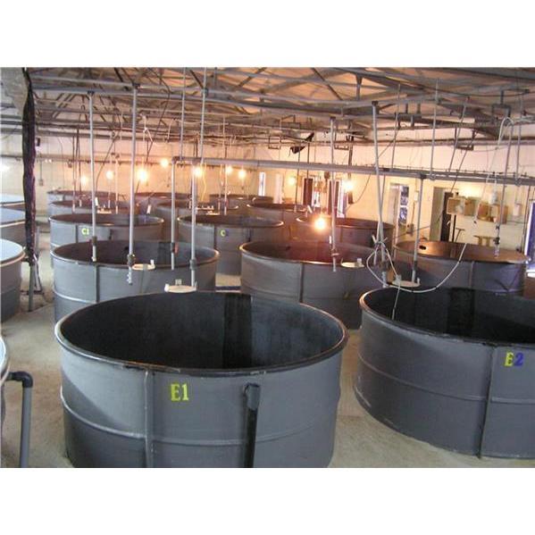 201383-Aquaculture Products - Puppy Development Pool-ARMAPLAST Polyester San. ve Tic. Ltd. Sti.