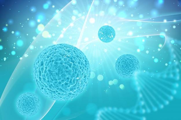 216379-Biotechnology Research and Experimental Development-Fitosan Ar-Ge Danismanlik Ilac Gida Egitim Tic. Ltd. Sti.