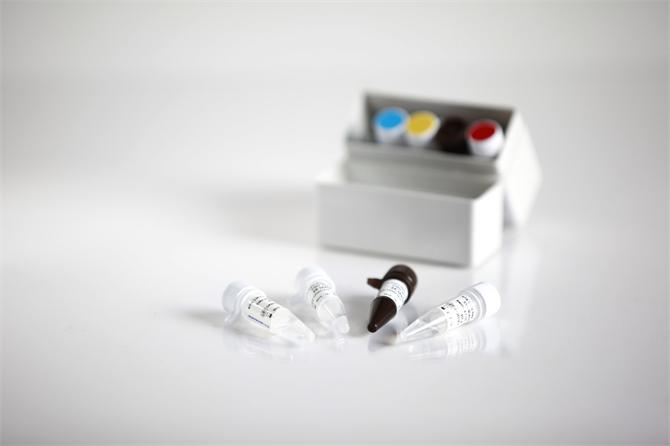 214809-Molecular Diagnosis - Real Time PCR Kits - Rta Hepatitis C Virus (Hcv) Genotyping Qpcr Kit-RTA Laboratuvarlari Biyolojik Urunler Ilac ve Makine San. Tic. A. S.